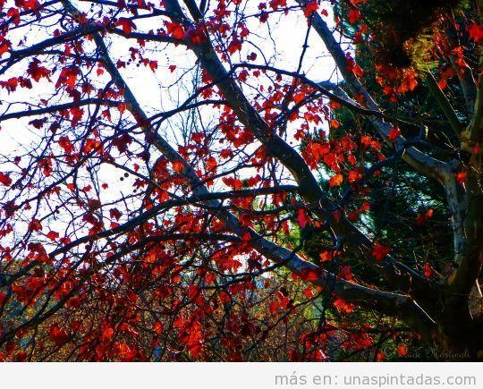 Diseño de uñas ramas árboles con flores 2